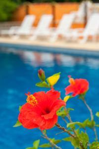 Hotel Ilhasol, Отели  Ильябела - big - 29