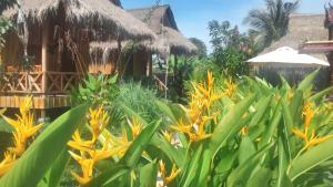 Albergues - Bird of Paradise Bungalows