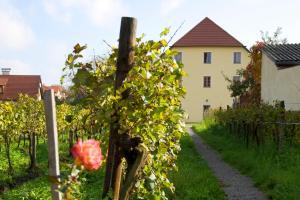 ad vineas Gästehaus Nikolaihof-Hotel Garni, Hotely  Mautern - big - 35