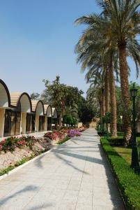 The Oasis Hotel Pyramids, Hotels  Kairo - big - 25