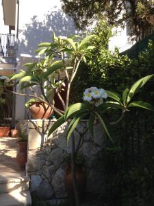 Il Giardino Dei Limoni, Отели типа «постель и завтрак»  Ачи Костелло - big - 31