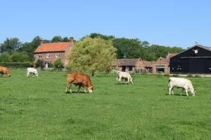 At the Farmhouse, Hunters Hall - North Elmham