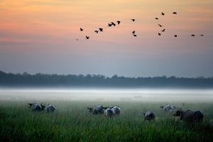 Bamurru Plains (6 of 30)
