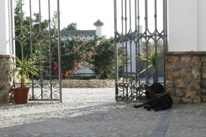 El Fogón del Duende, Bed and breakfasts  Arcos de la Frontera - big - 51