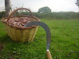 Turismo Rural Can Pol de Dalt - Bed and Bike, Case di campagna  Bescanó - big - 18