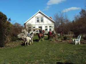 Farm stay Hof auf der Wurp - Hammelwarder Außendeich