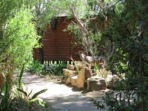 Elands River Lodge, Chaty  Machadodorp - big - 18