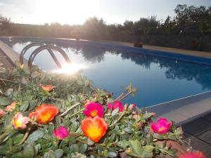 Uliveto Garden, Bed and breakfasts  Bagnara Calabra - big - 46
