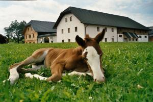 Espi-Stables Ferienhof Esterhammer, Farm stays  Liebenau - big - 36