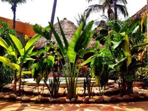 One Love Hostal Puerto Escondido, Hostels  Puerto Escondido - big - 49
