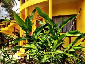 One Love Hostal Puerto Escondido, Hostels  Puerto Escondido - big - 44
