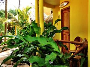 One Love Hostal Puerto Escondido, Hostels  Puerto Escondido - big - 19