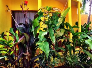 One Love Hostal Puerto Escondido, Hostels  Puerto Escondido - big - 28