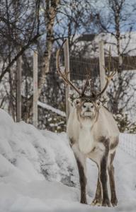 Kirkenes Snowhotel (35 of 47)