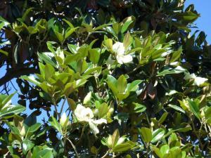 La Magnolia, Ferienhäuser  Maipú - big - 25