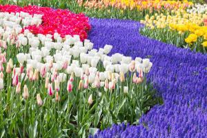 Golden Tulip Leiden Centre