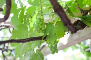 The Vineyard on Ballito, Pensionen  Ballito - big - 47