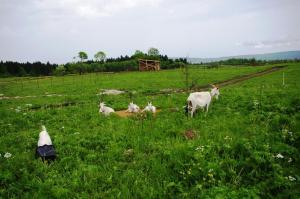 Kolhidskie Vorota Usadba, Farm stays  Mezmay - big - 137