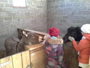 Kolhidskie Vorota Usadba, Farm stays  Mezmay - big - 38
