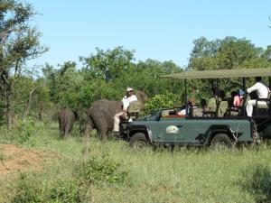 Honeyguide Tented Safari Camps, Luxusní stany  Rezervace Manyeleti - big - 19
