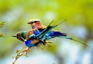 Honeyguide Tented Safari Camps, Luxusní stany  Rezervace Manyeleti - big - 7