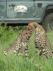 Honeyguide Tented Safari Camps, Luxusní stany  Rezervace Manyeleti - big - 17