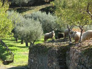 Quinta das Aveleiras, Farm stays  Torre de Moncorvo - big - 64
