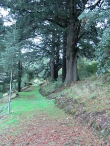 Quinta das Aveleiras, Farm stays  Torre de Moncorvo - big - 63