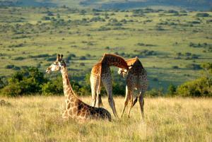 Lalibela Game Reserve (3 of 184)