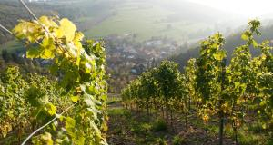 Weingut Hees - Landgasthof Zum Jäger aus Kurpfalz - Gehlweiler