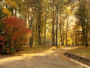 Leśna Przystań akceptujemy bony turystyczne
