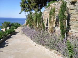 Aegean Castle Andros – Adults Only Andros Greece