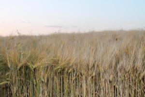 Agriturismo Il Pallocco, Farm stays  Montecastrilli - big - 88