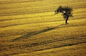 Agriturismo Il Pallocco, Farm stays  Montecastrilli - big - 94
