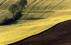 Agriturismo Il Pallocco, Farm stays  Montecastrilli - big - 92