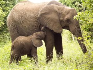 Victoria Falls Safari Club (28 of 34)