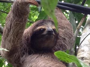 Villa Sloth
