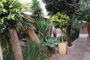 Saffron Guest House, Penziony  Johannesburg - big - 30
