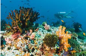 Baros Maldives (33 of 119)