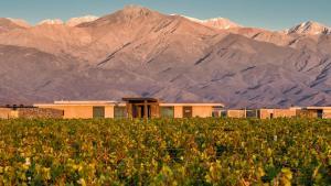 The Vines Resort & Spa (34 of 38)