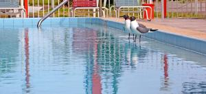 Beachwalk Inn, Motely  Clearwater Beach - big - 41