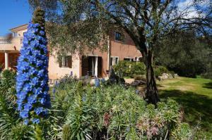 Location gîte, chambres d'hotes Chambre d'Hôtes Domaine Pero Longo dans le département Corse du Sud 2a
