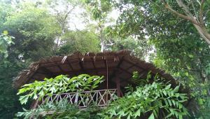 Tree House - Beach Front Bagus Place Retreat