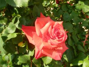 Chambre d'hotes Floralia