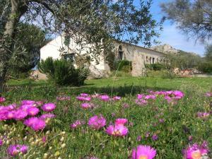 B&B La MeSenda, Agriturismi  Arzachena - big - 10