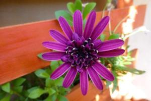 Auberges de jeunesse - Garden Fiorella