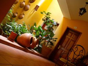 Hotel Casa Divina Oaxaca, Szállodák  Oaxaca de Juárez - big - 63