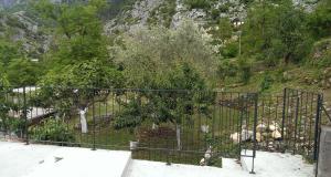 Olive Apartment, Apartmány  Kotor - big - 7