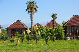 Кемпинг Бамбора, Гудаута