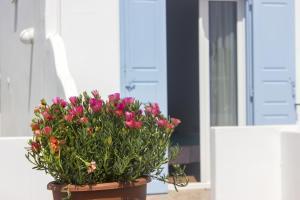 Sourmeli Garden Hotel, Hotel  Città di Mykonos - big - 61